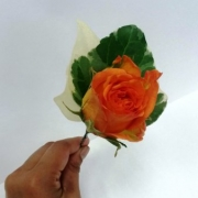 Floral_buttonhole rose